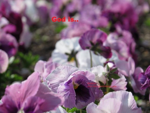flower-1544382_1280