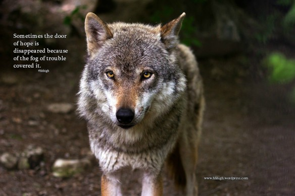 wolf-635063_1920