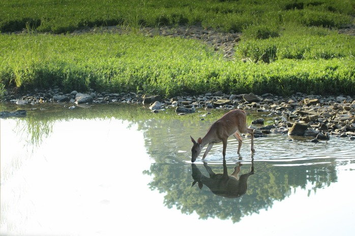 deer-2598453_1280