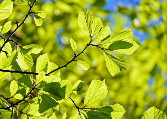 persian-oak-wood-3064187_1280