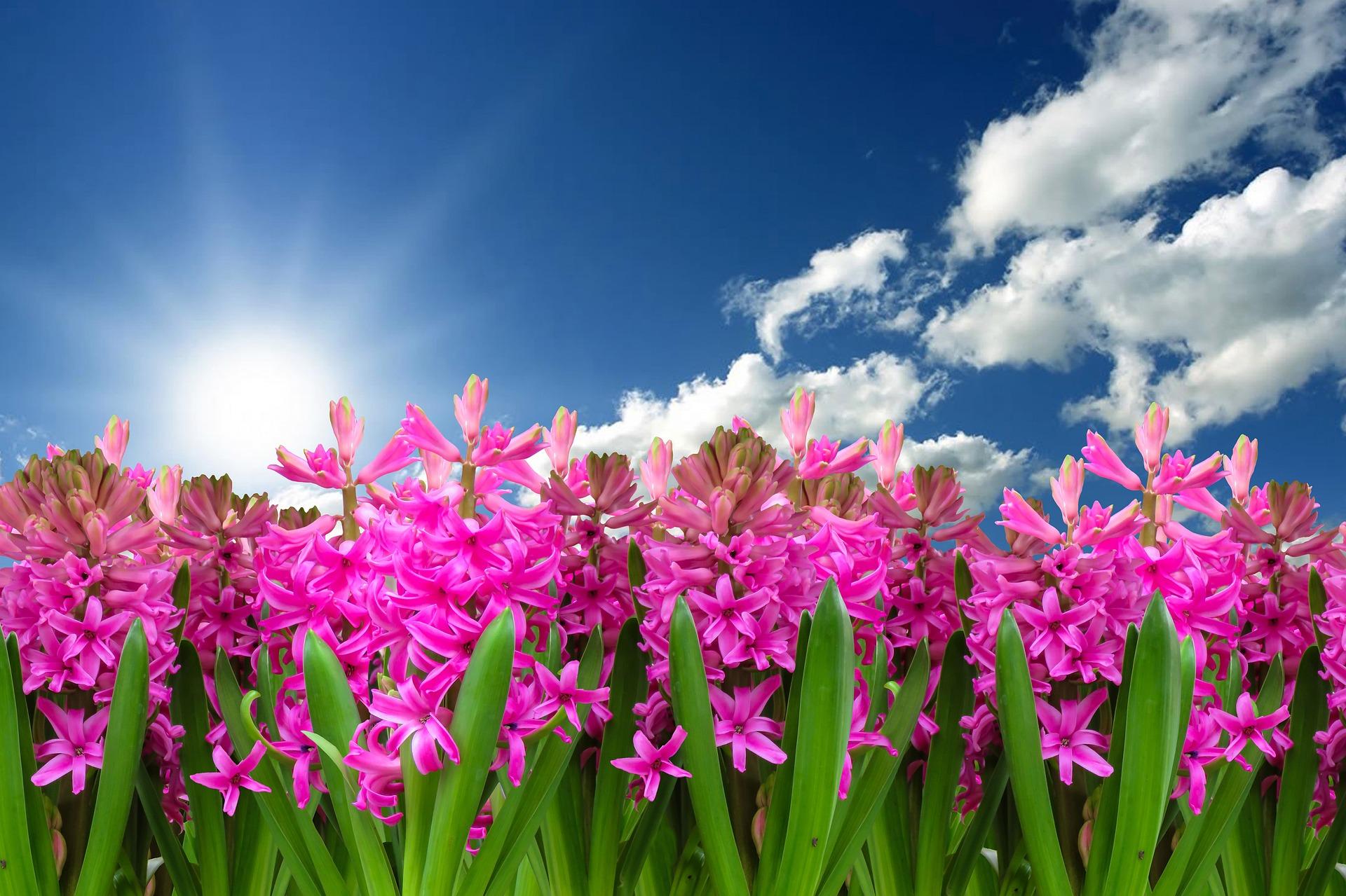 flower-3219718_1920