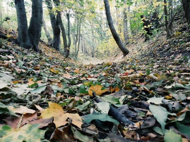 autumn-beautiful-color-609769