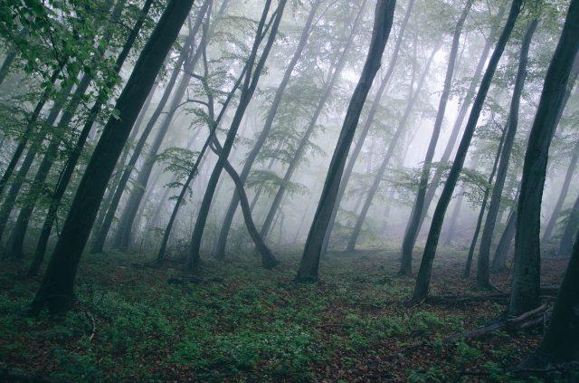 dark-fog-forest-6992