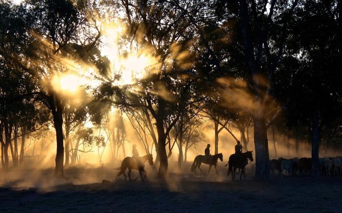 cowboys-1826527_1920