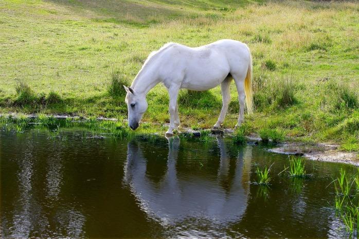 horse-51733_1920