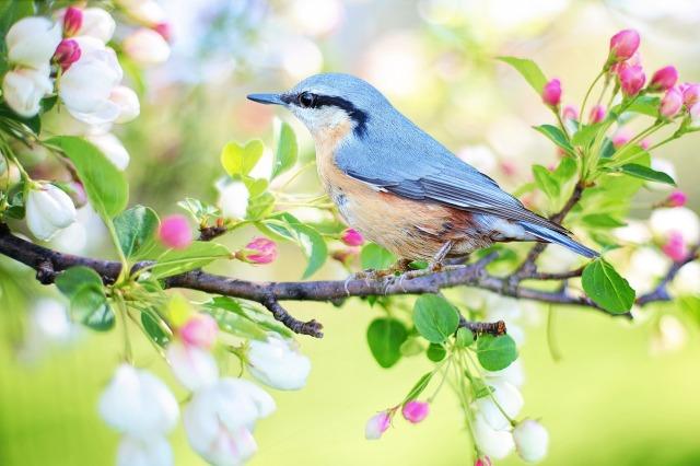 spring-bird-2295431_1920